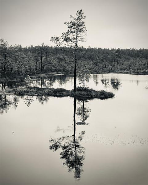Kirk-Widra_tree-reflections